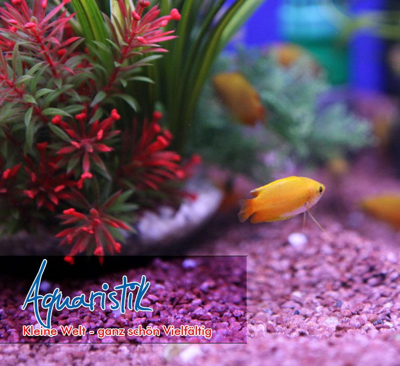 aquaristik506f27f9ce5af